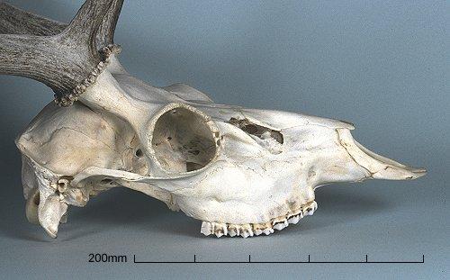 【图】一些动物的头骨